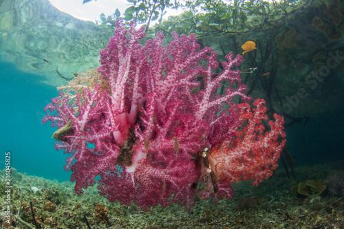 Foto op Plexiglas Crimson Vibrant Soft Corals Growing at Edge of Mangrove Forest