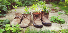 Old Shoes Plant Decoration Reu...