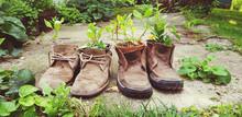 Old Shoes Plant Decoration Reuse Old Stuff Creative Concept