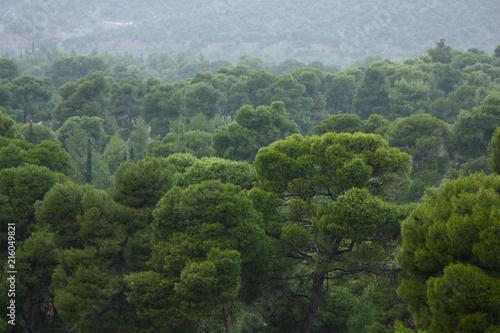Fotobehang Bleke violet Greek Forest