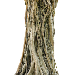 Tree trunk isolated on white background. This has clipping path.