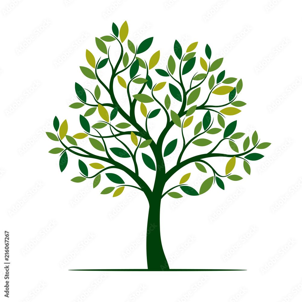 Fototapety, obrazy: Green Spring Tree. Vector Illustration.