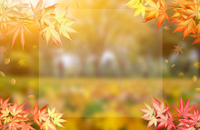 Fall And Autumn Background. Colorful Leaf And Copy Space For Text