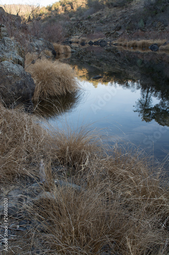 Fotografie, Obraz  Calm pond water and grass on shore