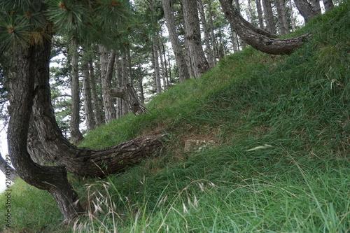 Fotografía  bosco con alberi in italia