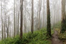 Eucalyptus Forest Cloud. Summe...
