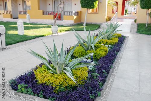 Slika na platnu Flowerbed on territory of hotel at resort