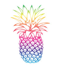 Pineapple Colorful Sketch Isol...
