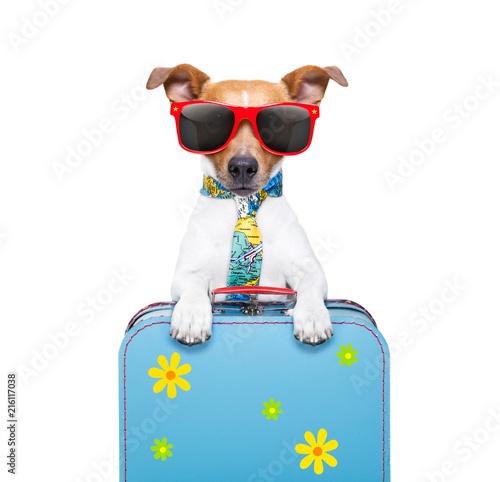 Keuken foto achterwand Crazy dog holiday dog