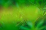 Fresh natural green bokeh effect background