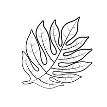Breadfruit Leaf Isolated On White Background Vector Illustration