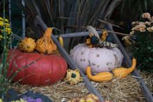 Autumn Squash And Pumpkin Display, Canada