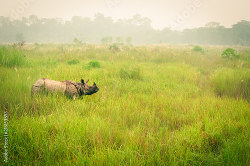 Spoed Foto op Canvas Neushoorn Wild endangered one-horn rhinoceros grazing in a grass field in Chitwan National Park, Nepal, during an elephant safari for tourists.