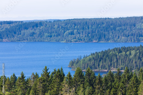 Fotografia, Obraz  The green forest of fir, spruce an pine trees near the shore of the Ladoga in Ru