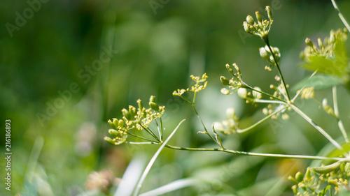 Plakat jasny kwiat bliska, tło do prezentacji i zaproszenia
