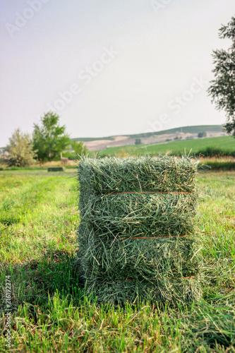 Cuadros en Lienzo Small Square Alfalfa Hay Bales in Field