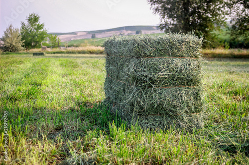 Small Square Alfalfa Hay Bales in Field Wallpaper Mural