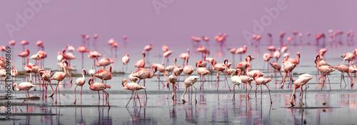 Fenicotteri rosa e fenicotteri minori a Lake Natron in Tanzania