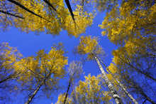 Colorful Autumn Forest Trees Under The Clear Blue Sky