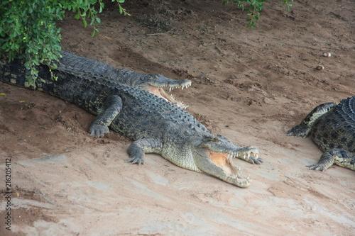 Foto op Plexiglas Krokodil crocodiles, Thailand