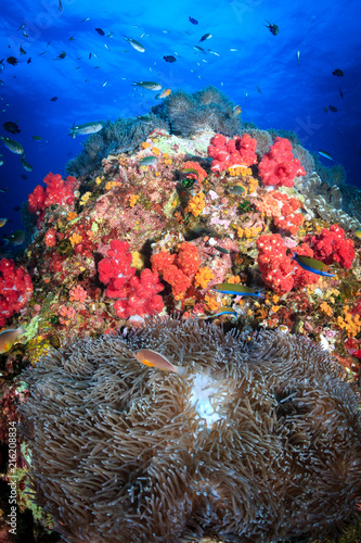 Fototapety, obrazy: A healthy, colorful tropical coral reef full of marine life