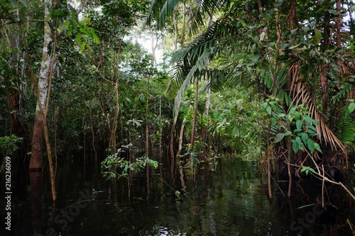 Recess Fitting Forest river flooded rainforest jungle during the rainy season with beautiful reflection