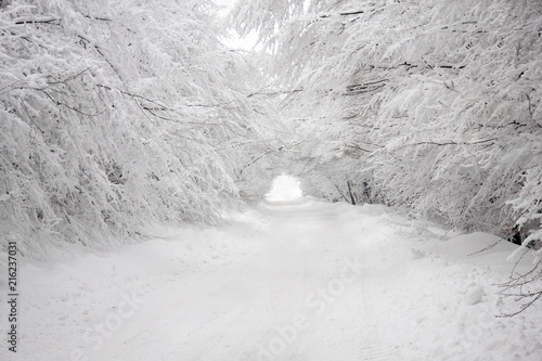 Fotografie, Obraz  Heavy Snow tunnel through the snowy forest road