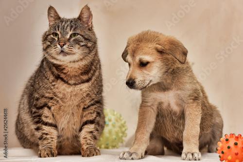 Cat and puppy © Evdoha