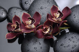 Fototapeta Orchid - spa concept –lying on orchid and black stones