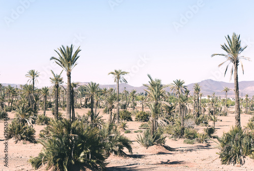 Staande foto Afrika Typical Moroccan Landscape North Africa Morocco