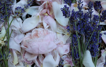Victorian Rose And Lavender Po...