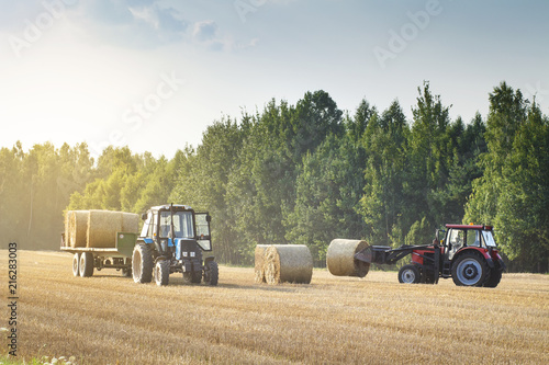 Cuadros en Lienzo Agricultural machinery on a chamfered golden field moves bales of hay after harvesting grain crops