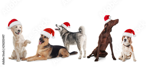 Row of cute dogs with Santa Claus hats on white background. Christmas  concept 131abd047782