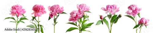 Photo Set of beautiful peony flowers on white background