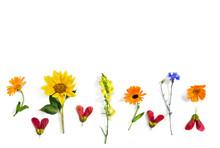 Wildflowers Summer Sunflower, ...
