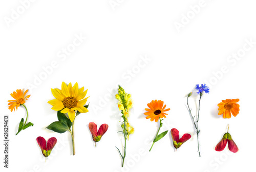 Obraz Wildflowers summer sunflower, flowers calendula, linaria, blue cornflower, red samaras maple ash with space for text on white background. Top view, flat lay - fototapety do salonu