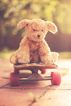 Cute Bear On A Skateboard At Early Dawn With The Sunrise Behind