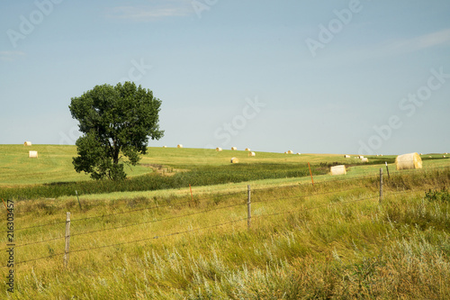 Deurstickers Honing Green Countryside in South Dakota