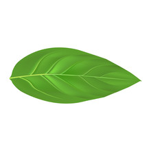 Peach Leaf Mockup. Realistic Illustration Of Peach Leaf Vector Mockup For Web Design Isolated On White Background