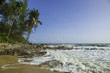 coconut trees on the shore
