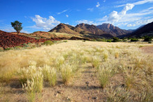 Landscape Of The Brandberg Mountain With Grassy Plains And Trees, Namibia.