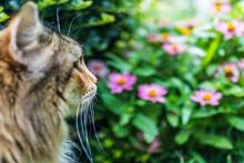 Closeup Portrait Of Fluffy, La...