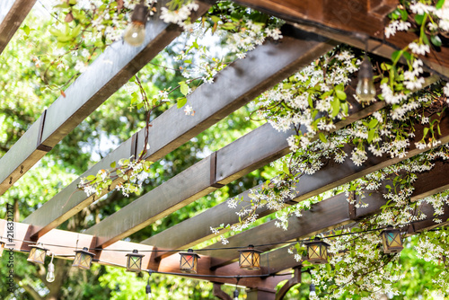 Fotografia  Closeup of patio outdoor spring flower garden in backyard porch of home, zen wit