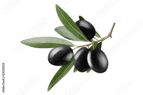 Olive branch with beautiful black olives, isolated on white background