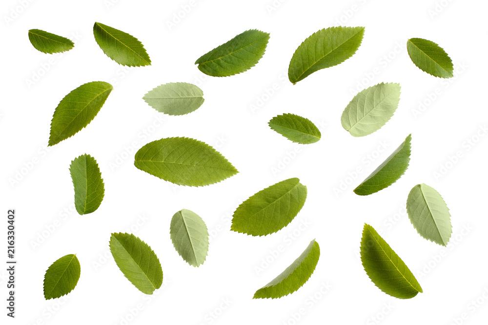 Fototapeta Set of green leaves, isolated on white background