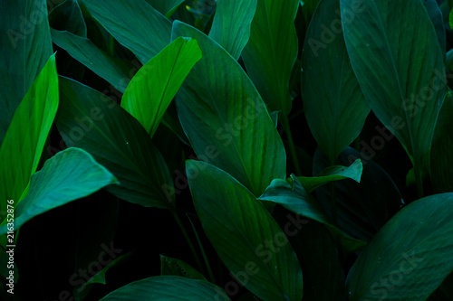 Spoed Foto op Canvas Natuur green leaves background. nature concept.