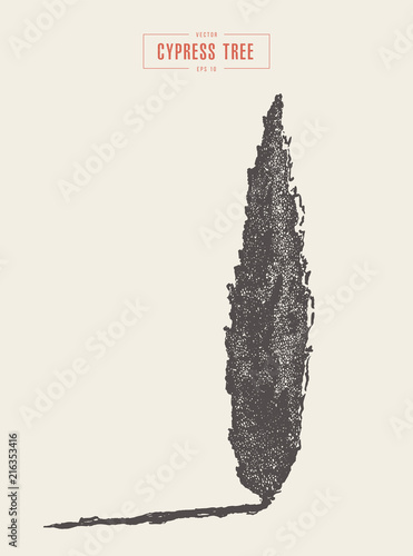 High detail vintage cypress tree, drawn, vector Fotobehang