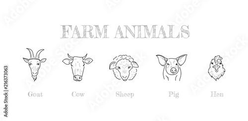 Farm animals hand drawing #216373063
