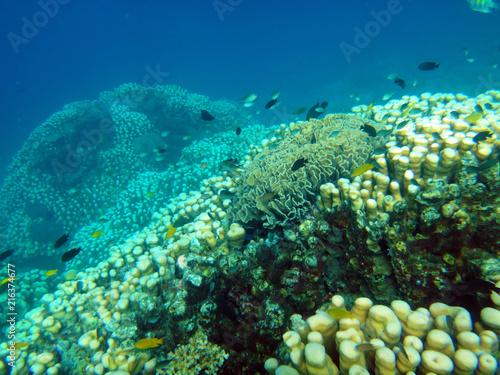 Fotobehang Oceanië Sealife of Tranquility Island, Efate, Vanuatu