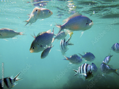 Foto op Aluminium Oceanië Sealife of Port Vila Harbor, Efate, Vanuatu